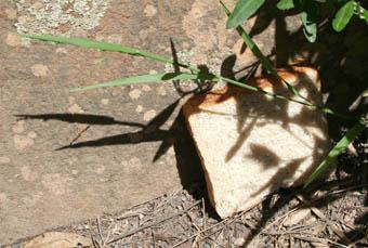 bread-shadow-web